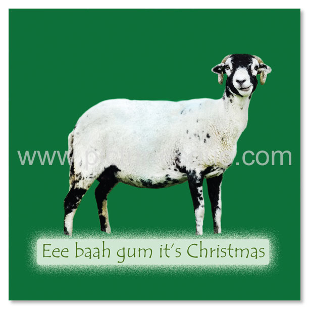 A Yorkshire Christmas Card featuring Sidney the Swaledale sheep
