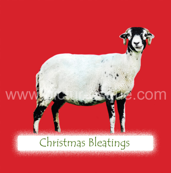 Red Swaledale Sheep Christmas Card