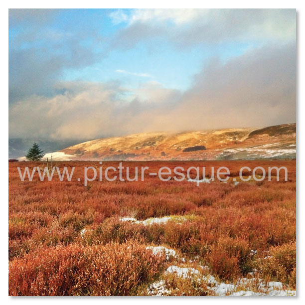 A photographic Christmas card featuring a photo of Cowesby Moor near Boltby Forest in the snow