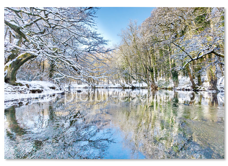 A Christmas card featuring a photo by Charlotte Gale of Nidd Gorge near Knaresborough in the snow