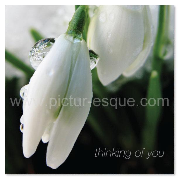 Snowdrop Winter Thinking of You card by Charlotte Gale