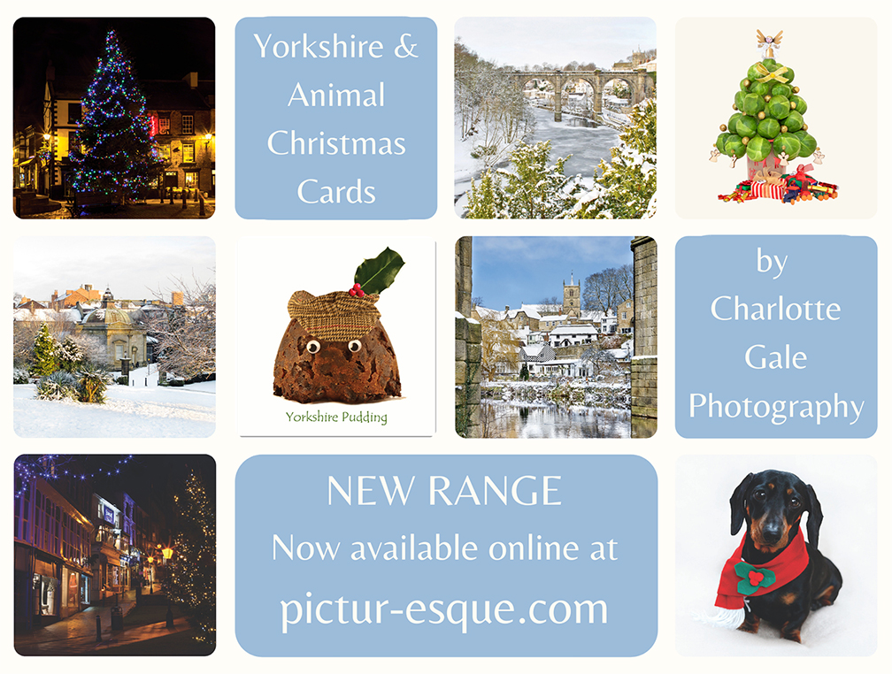 Yorkshire Christmas Cards by Charlotte Gale